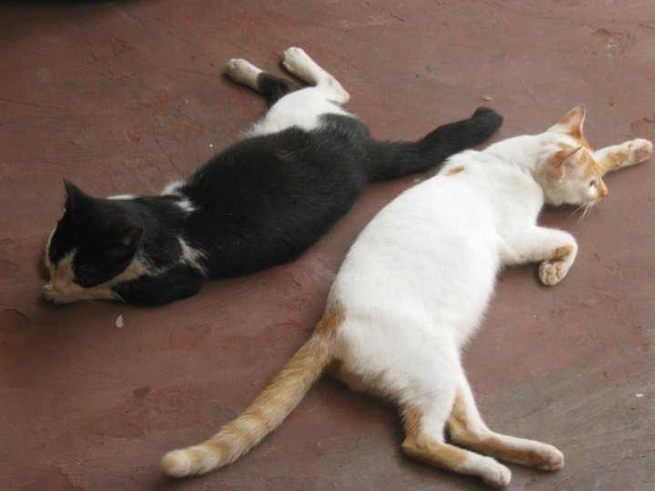 YIN AND YANG. The best behaved cats on the block